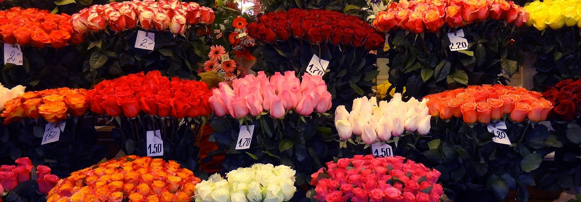 Flower Market - Tallinn, Estonia