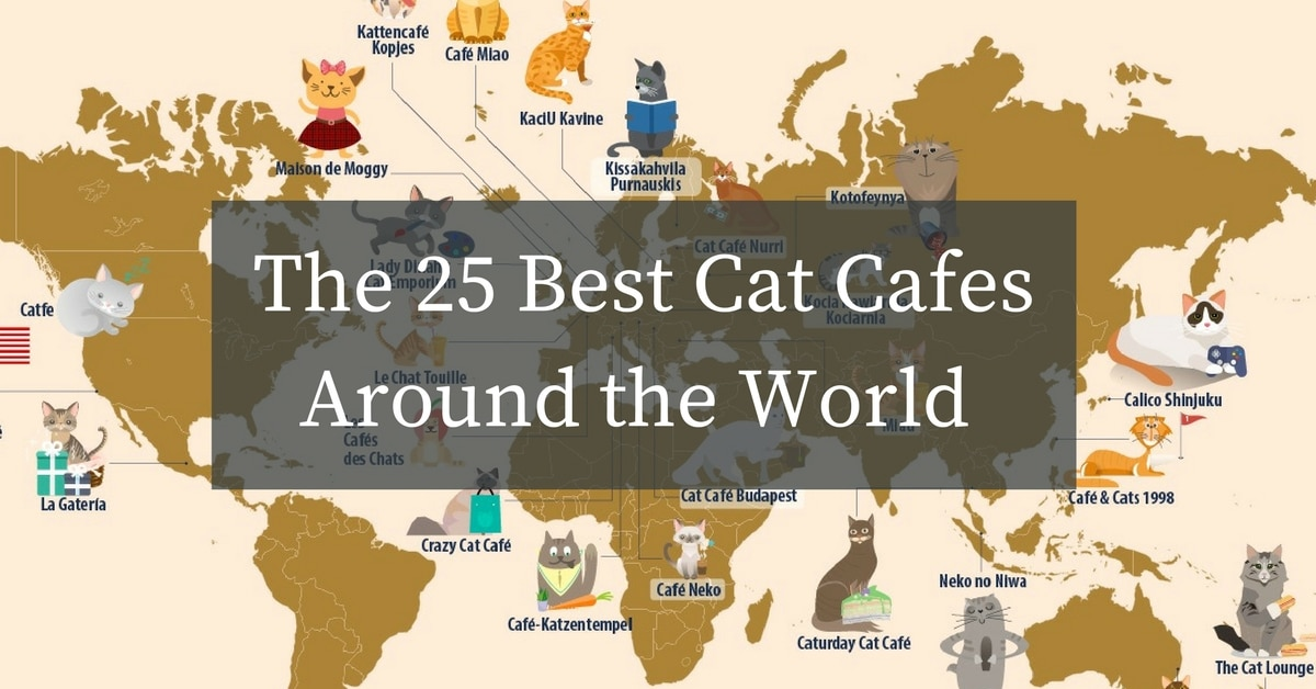 Cat Map Of The World.The 25 Best Cat Cafes Around The World Exeter