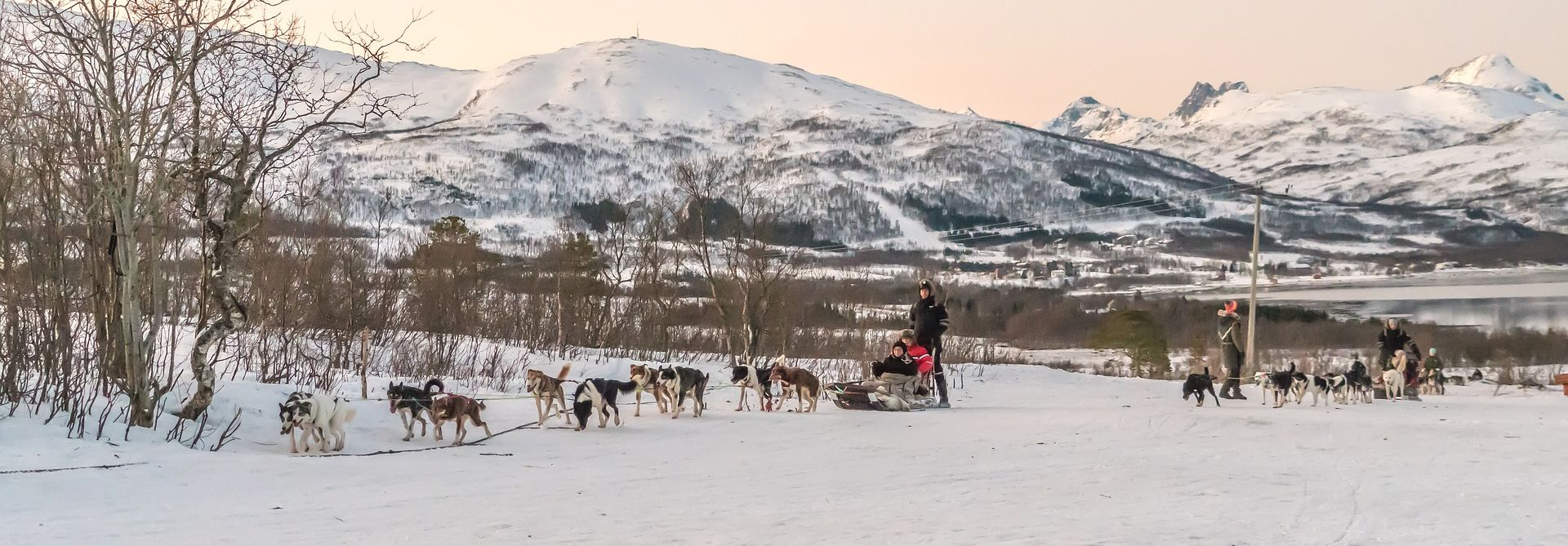 Dog Sledding, Lapland